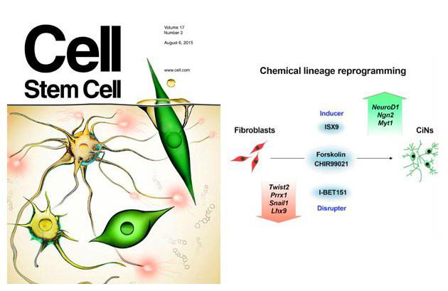cell stem cell 杂志刊登邓宏魁研究团队重要成果
